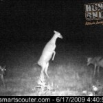 Doe on hind legs