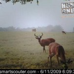 Older Buck