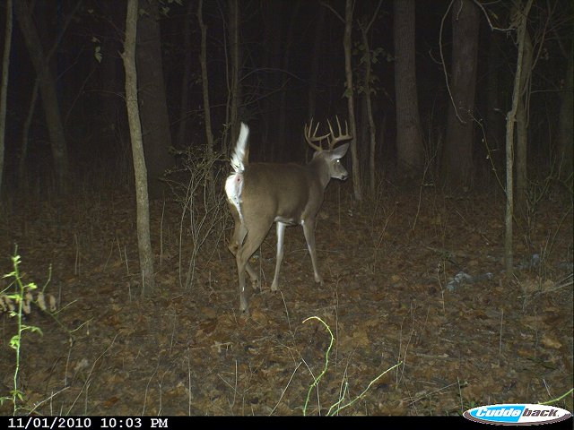 Cuddeback Capture Picture