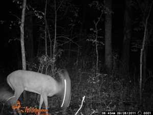 Wildgame Innovations Blur