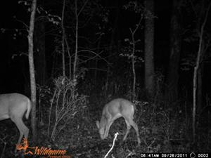 Wildgame Innovations Sample Infrared Image