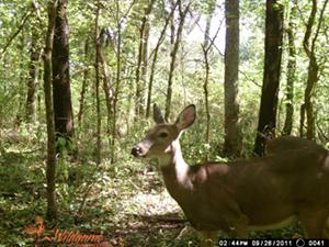 Wildgame Innovations Sample Image