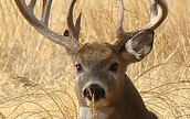 Can scouting cameras make you a better hunter?