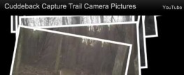 Cuddeback Capture Trail Camera Pictures