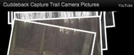 Cuddeback Capture Trail Camera Pictures