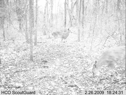 Scoutguard SG550 Pictures